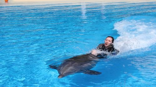Dolphin rides in Goa